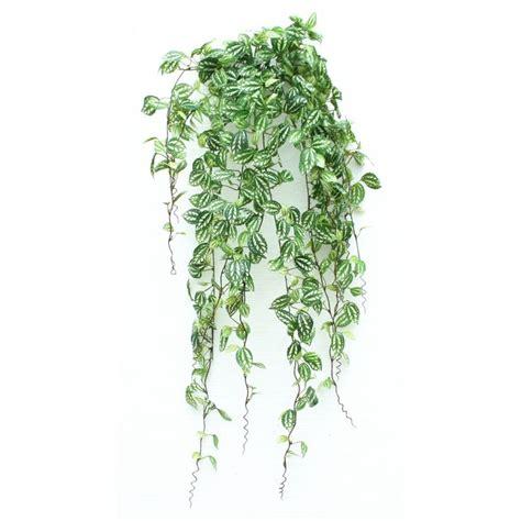 les 25 meilleures id 233 es de la cat 233 gorie plantes artificielles sur plantes