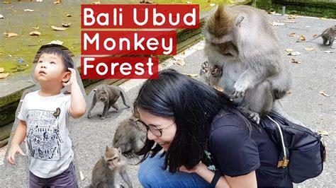 Monkey Forest Bali Ubud Mama Panik Dinaiki Monyet
