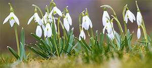 Blumen Im Winter : diese pflanzen bl hen im winter ~ Eleganceandgraceweddings.com Haus und Dekorationen