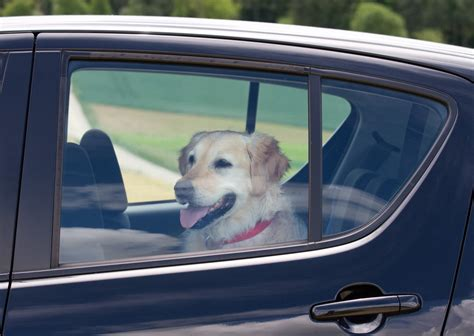 Bill Would Allow Bystanders To Free Pets Locked In Hot Cars