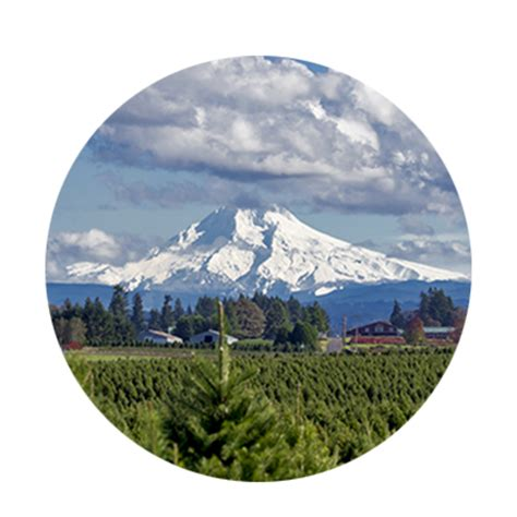 christmas tree farms near mt hood your travel tourism resource oregon s scenic mt territory