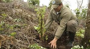 Gnp News  Galapagos Reforestation To Help The