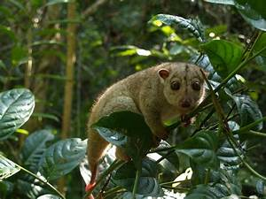 cute animals from the rainforest image search results