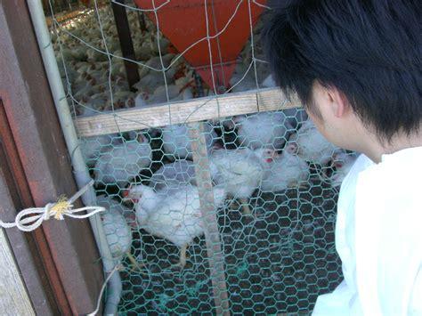 鳥 インフルエンザ 症状