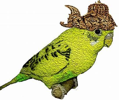 Parkit Burung Raja Yang Cerdik Dongeng Parakeet
