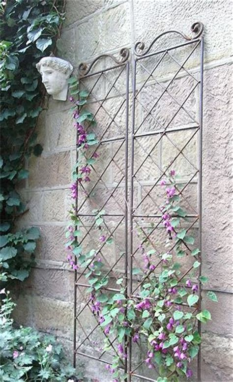 best 25 metal trellis ideas on metal garden