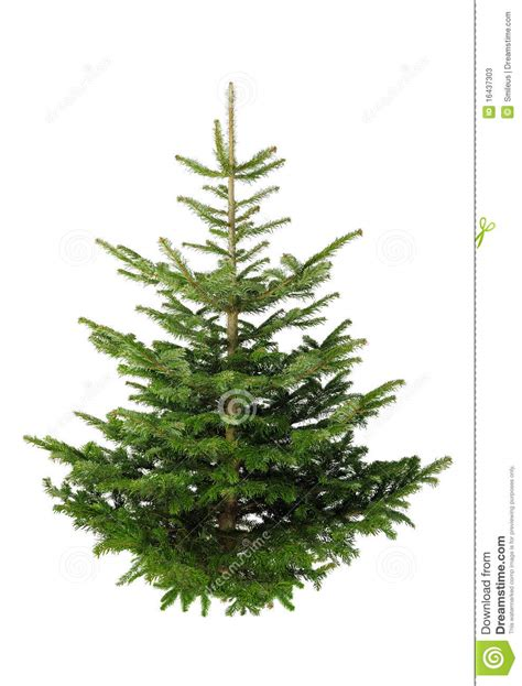 christmas tree without ornaments stock photos image