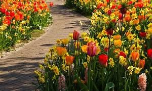 Planter Des Bulbes : 5 conseils pour planter des bulbes de fleurs trucs pratiques ~ Dallasstarsshop.com Idées de Décoration