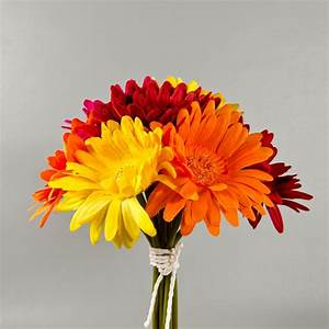 """10"""" Tall Gerbera Daisy Bouquets - Wholesale Flowers and ..."""