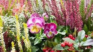 Blumenkübel Bepflanzen Vorschläge : k bel und balkonk sten herbstlich bepflanzen ratgeber garten ~ Frokenaadalensverden.com Haus und Dekorationen