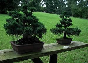 Chinesischer Wacholder Bonsai : pin juniperus chinensis chinesischer wacholder als bonsai balkon pflanzen on pinterest ~ Sanjose-hotels-ca.com Haus und Dekorationen
