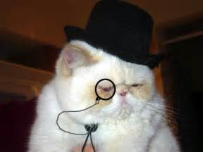 cat in hat cats in the hats 15 hilarious pictures kitty bloger