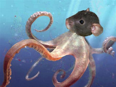 my livingroom oh rats kraken