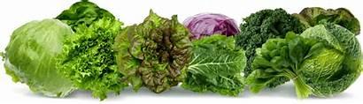 Keto Vegetables Carb Low Eat Leafy Vegetable