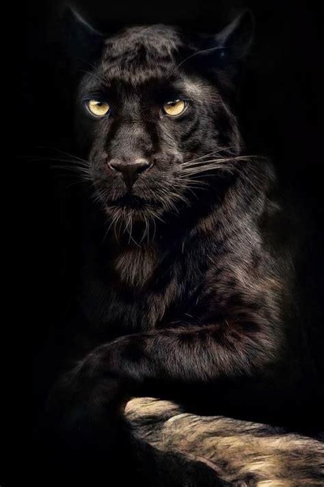 images  black panther  pinterest black