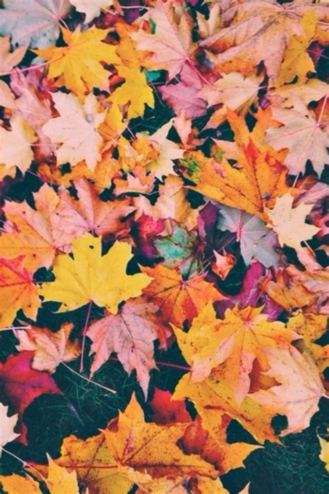 Fall Backgrounds Trendy by Pin By Ashtyn Oswald On Happiness Fall Wallpaper Fall