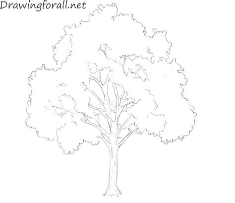 draw  tree  beginners drawingforallnet