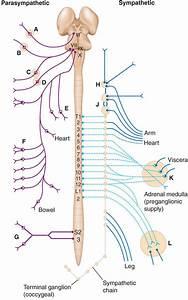 Autonomic Nervous System Disorders - Neurology