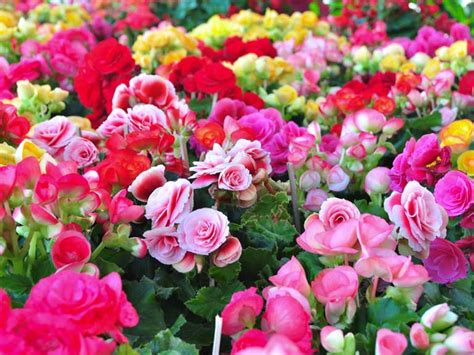 Summer Bedding Plant Ideas Saga