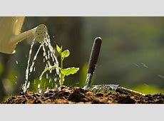 10 Ways to Conserve Water AND Grow Beautiful Gardens