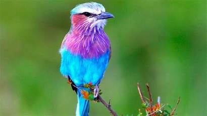 Birds Exotic Bird Colorful Tropical Cool Colourful