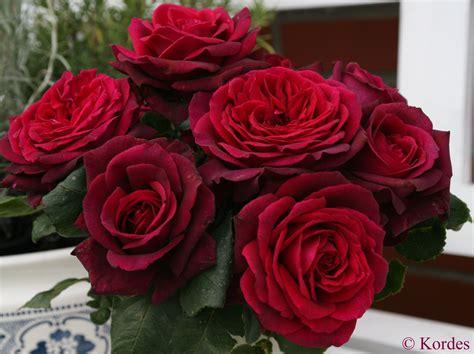 Chamblee Rose Nursery