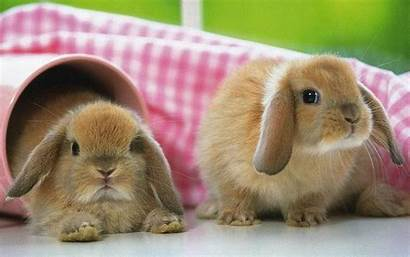 Rabbit Wallpapers Bunny Bunnies Rabbits Conejo Onewallpapersfortollyto3d