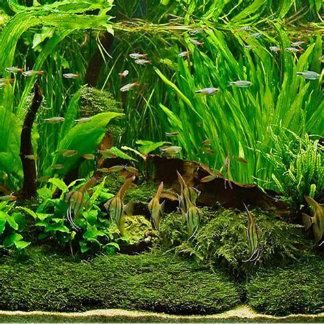 live aquatic plants for aquariums amazing