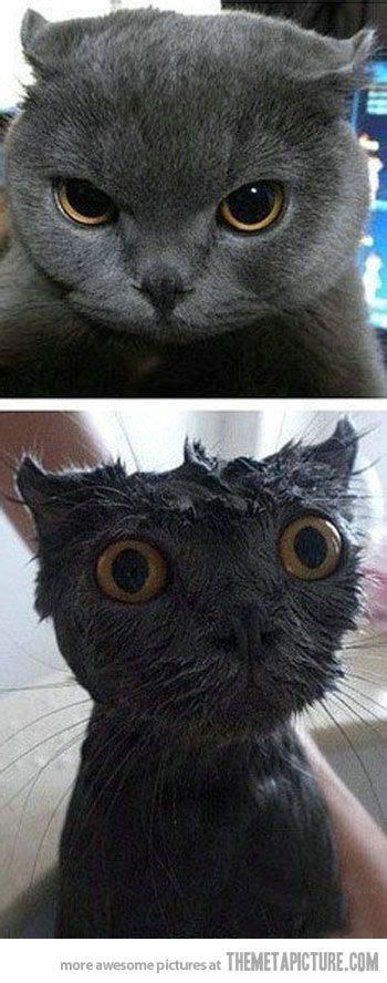 funny animals animal memes images  pinterest