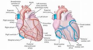 Emergency Cardiac Drugs  Essential Facts For Nurses