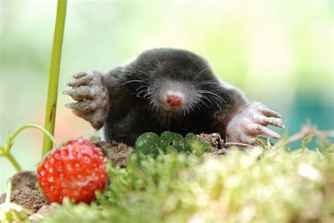 50 Mole Jokes And Puns That Are Super Mole some by Kidadl