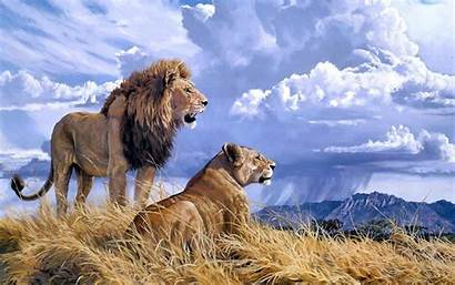 Lion Lioness Lions Wallpapers Animals Mountains Clouds