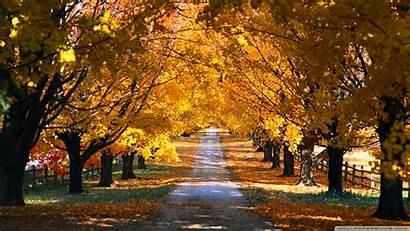 Screensavers Fall Scenes Autumn Tree Road Wallpapersafari