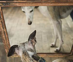 What Do Animals See in the Mirror?
