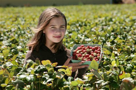 Wann Kräuter Ernten by Erdbeeren Ernten 187 Wann Und Wie