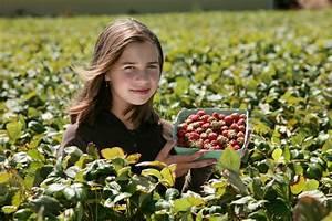 Ab Wann Erdbeeren Pflanzen : bis wann rhabarber ernten rhabarber pflanzen und ernten ab wann bis wann wie bis wann ~ Eleganceandgraceweddings.com Haus und Dekorationen