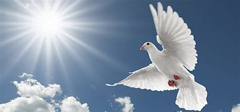 Photographic Background Dove Of Peace, Peace, Dove
