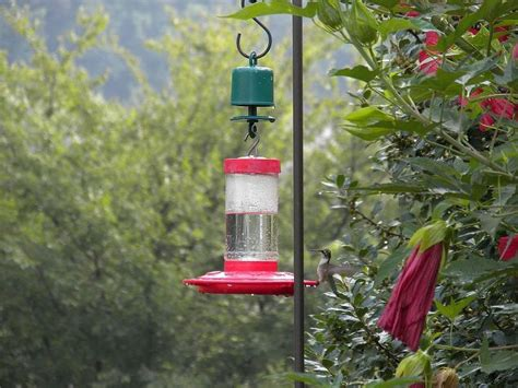 this is hands down the best ant guard for hummingbird