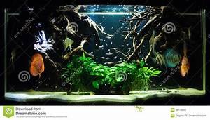 Schöne 3d Bilder : sch ne blaue fische im aquarium stockfoto bild 46178600 ~ Eleganceandgraceweddings.com Haus und Dekorationen