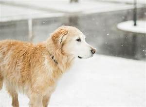 how to take care of your dog in winters With winter dog care