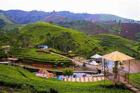 tiket masuk kaligua kebun teh bumiayu brebes rute alamat