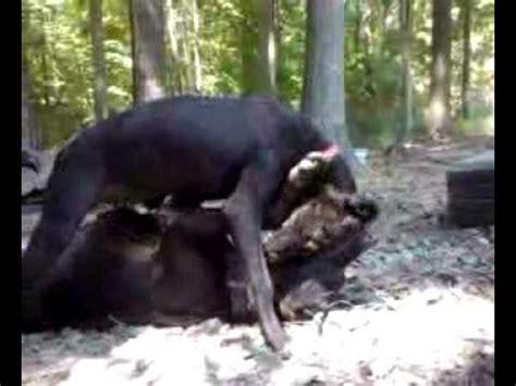 heavy renerage jeepredboyrascal pitbull puppy youtube