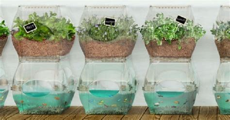 Amazingly Simple Aquaponics Systems