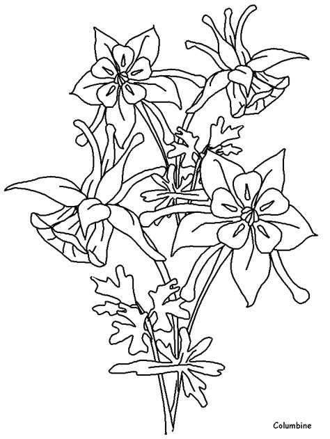 Printable Columbine Flowers Coloring Pages