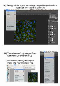 User Guide  Export Microscope Images From Imagej  Fiji Into