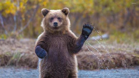 Animal Cubs Wallpapers - cub wallpaper animal wallpapers 33905