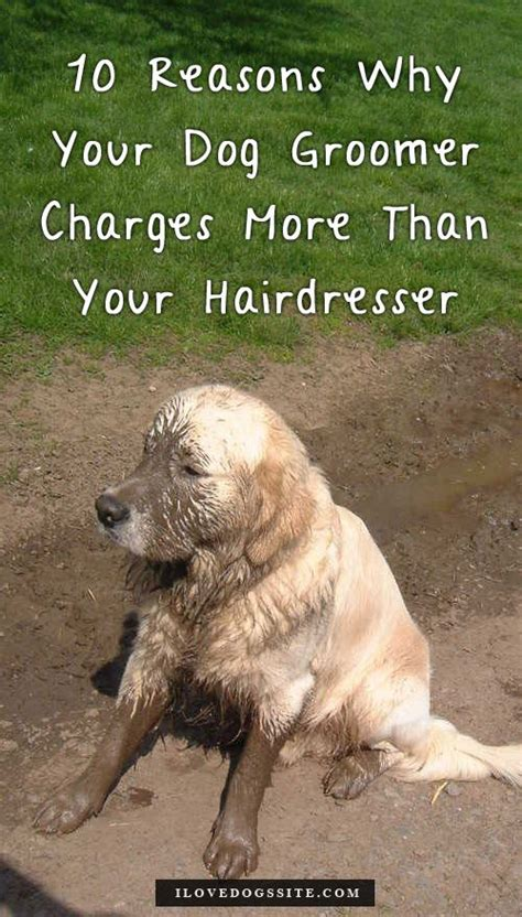 Dog Groomer Meme - 93 best grooming dogs images on pinterest cute kittens doggies and pets