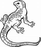 Lizard Coloring Printable sketch template