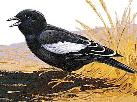 colorado state bird kids encyclopedia children s