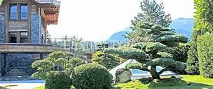 Heimische Pflanzen Für Den Garten : sichtschutz aus pflanzen f r garten terrasse luxurytrees ~ Michelbontemps.com Haus und Dekorationen
